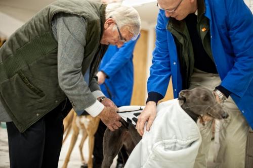 Preparation for greyhound race