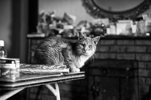 011. Cat at Denis' home