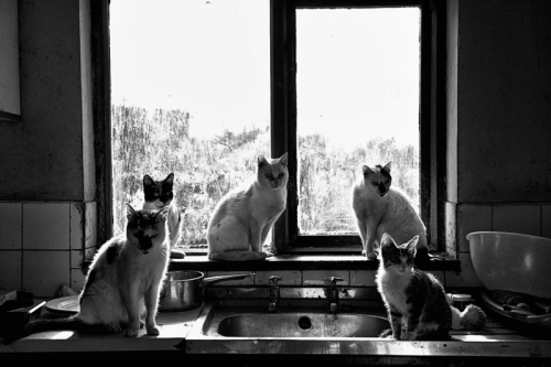 013. Cats in the kitchen