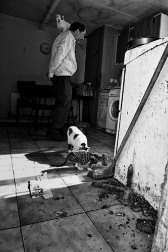 014. Cats in the kitchen