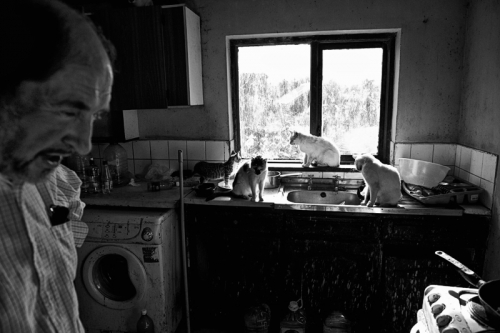 015. Denis and cats in the kitchen