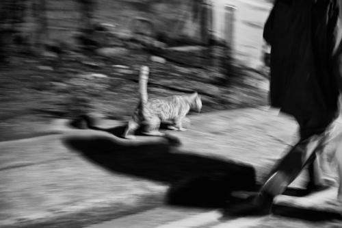 016. Cat walks with Denis