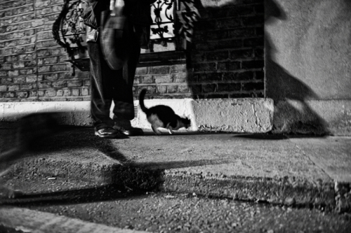 017. Denis feeds the cats on the street at night