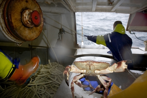 Crab fishing. Atlantic Ocean, West of Ireland