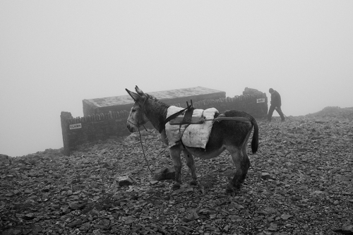 Donkey used for transport of the goods on the top of Croagh Patrick, Ireland