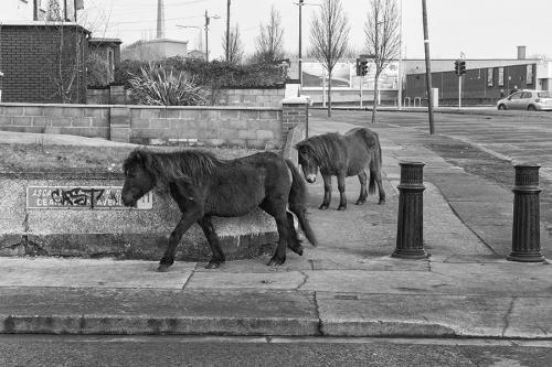 Abandoned horses on the street of Dublin