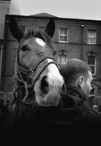 Horse and his owner at Smithfield horse fair, Dublin