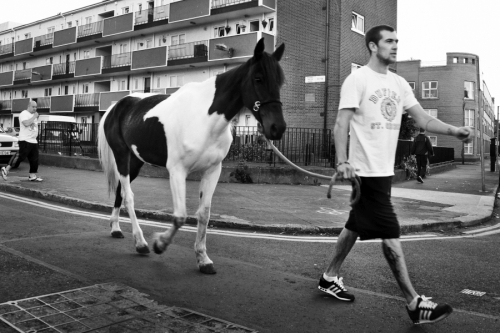 Young man leads a horse at the Dublin city centre