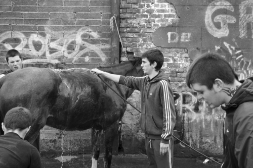 Horse is being washed at city centre stables, Dublin
