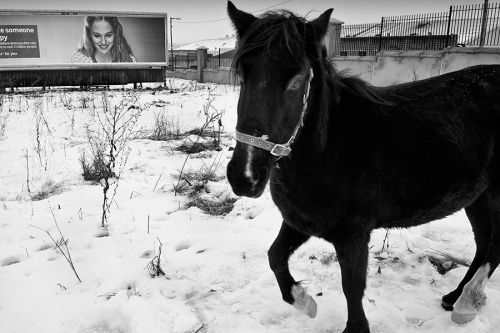 Horse stands on snow covered pasture inside industrial estate, Dublin