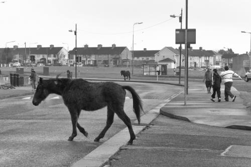 Free roaming horses on the street of Dublin