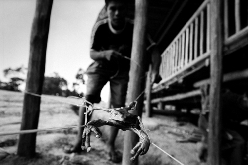 020. Matses boy holds a frog